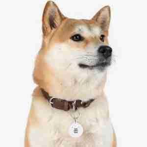Custom Pet Tag Personalized Dog Cat Tag